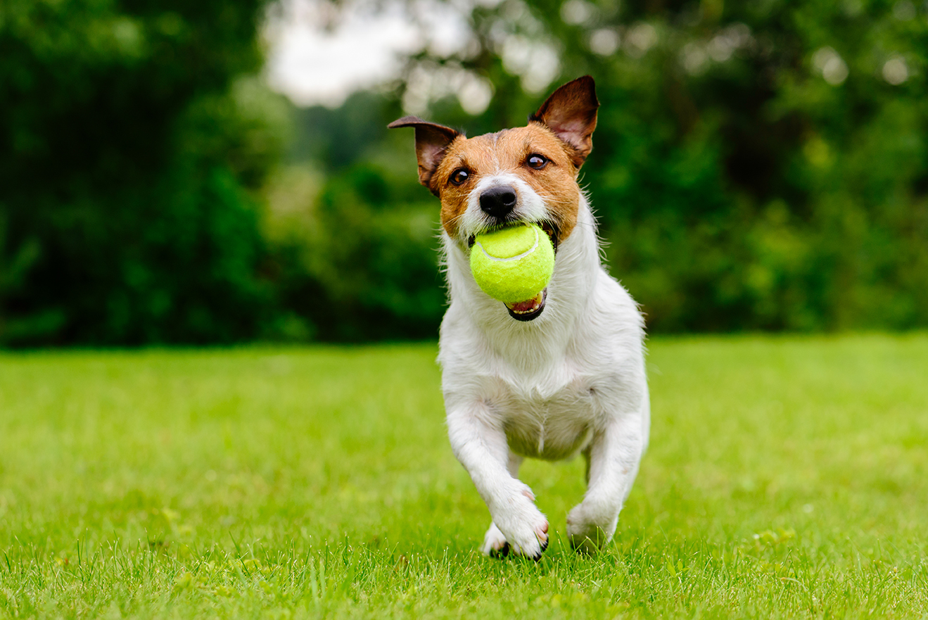 3 Fantastic Pet Run Ideas for the Best Artificial Grass for Dogs in Las Vegas