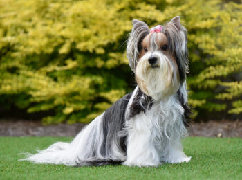 Signs You Should Install Artificial Pet Turf