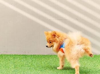 dog-pee