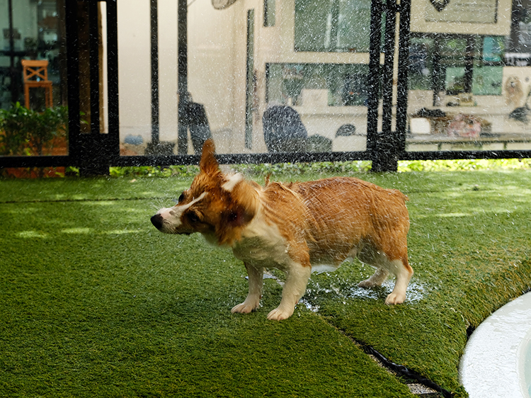 Artificial Grass for Dogs in Seattle is Perfect for Pet Pools
