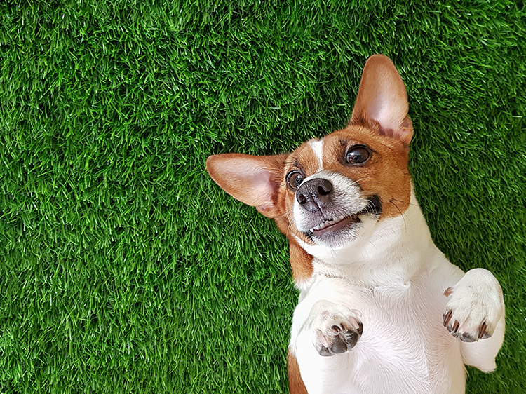 Best Artificial Grass for Dogs in Phoenix