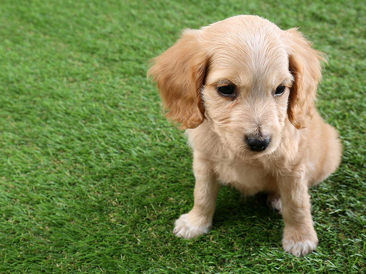 Staying Clean with Charlotte NC Artificial Grass for Dogs