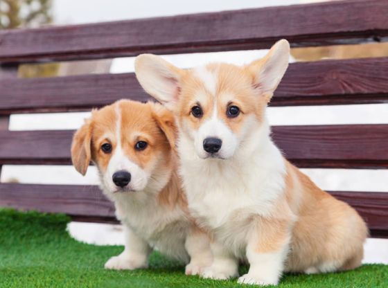 About Tampa Synthetic Grass for Dogs