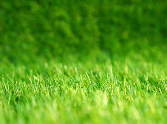Realistic-Looking Artificial Grass