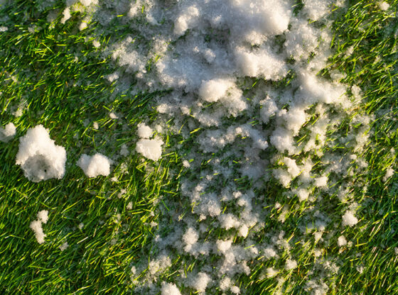 Winter Care Facts for Turf