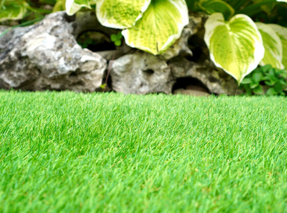 Artificial Grass Installers in Long Island Suggest Plants for Shady Yards