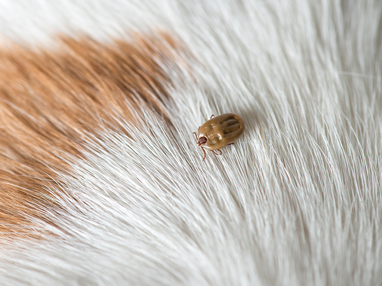 Protects Pets from Ticks in the Backyard
