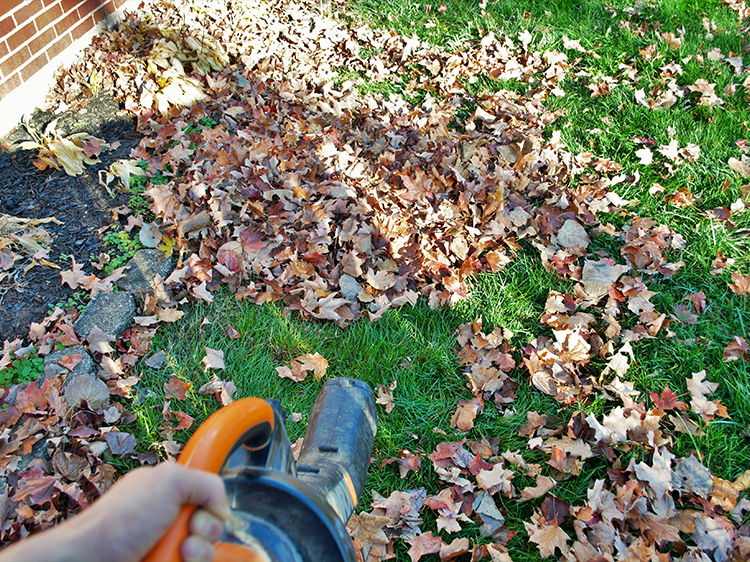 CLEAN UP WITH A LEAF BLOWER