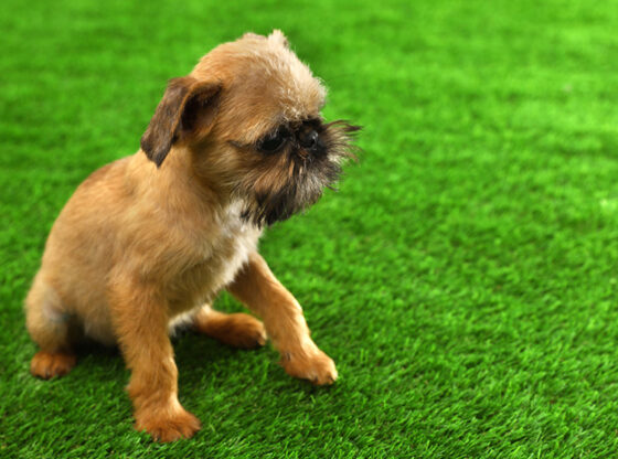 Making Yards Safer for Dogs