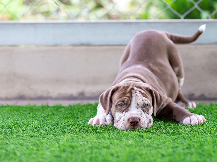Best Artificial Grass for dogs