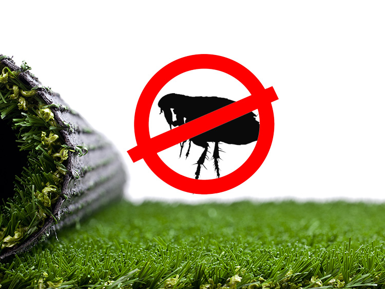 Prevent Fleas with Synthetic Putting Green Installation in Orlando