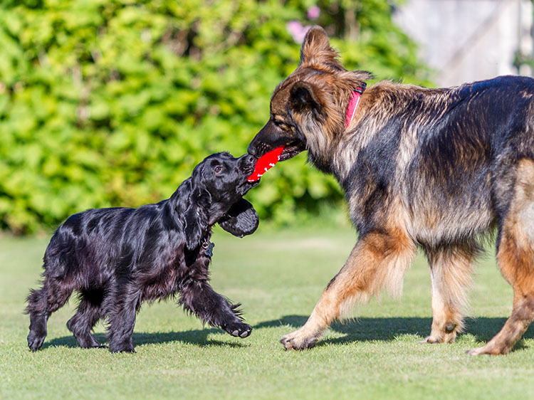 artificial grass for canines dogs